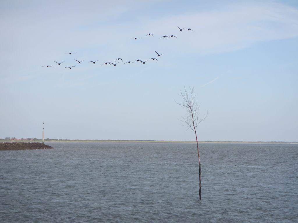 Wangerooge Hafen Pricke Vögel