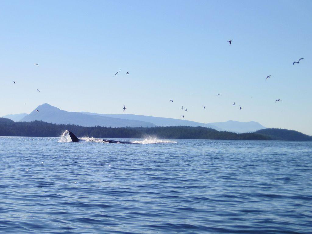 Wale im Nebel
