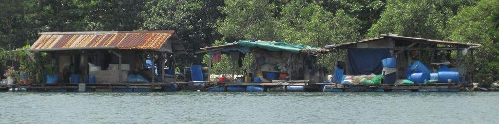 Singapur: Paddeln unter tropischer Sonne